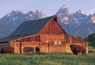In 1923, in light of unchecked development in front of the majestic Tetons,  a meeting was held at Maud Noble's Cabin,  it was decided by local ranchers and businessmen that they wanted to preserve the valley as a 'museum on the hoof.' This set in motion the conservation and preservation of this mountain valley, which in 1929 congress created Grand Teton National Park.  Today, it's a national treasure in our backyard, from wildlife watching to recreation, its one of most accessible National Parks for all types of residents and visitor's alike.