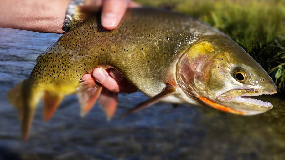 Fall Fly Fishing in Jackson Hole