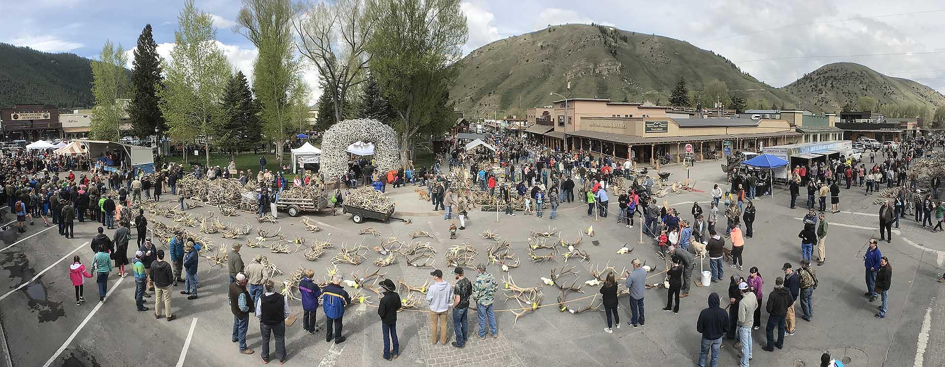 Elkfest in Jackson Hole