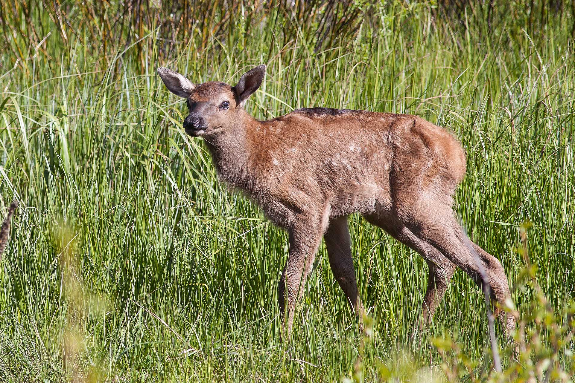 Spring Wildlife in Grand Teton National Park