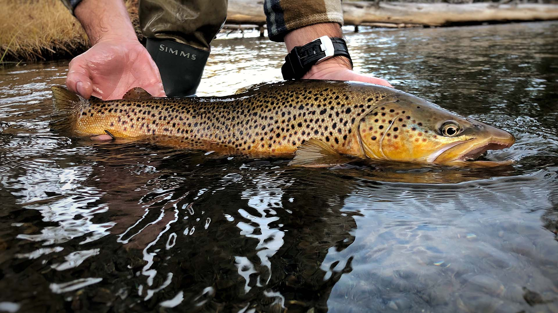 Fly-Fishing-Lewis-Channel-Yellowstone-13a