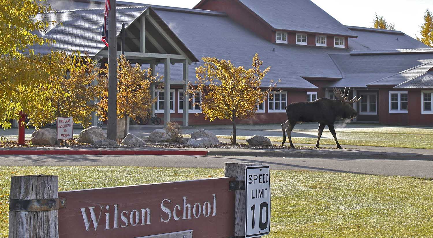 Bull Moose at the Wilson School - Jackson Hole