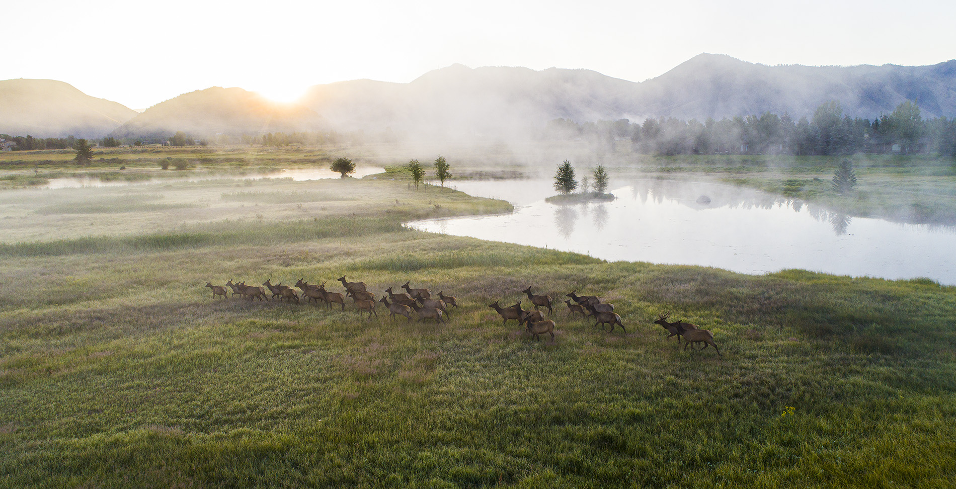 Cody Creek Ranch Elk Herd - Jackson Hole Real Estate