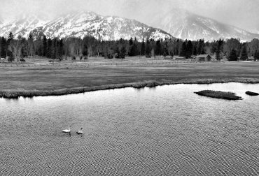 Pristine Habitat: Trumpeter Swans and Jackson Hole's Unique Wetlands